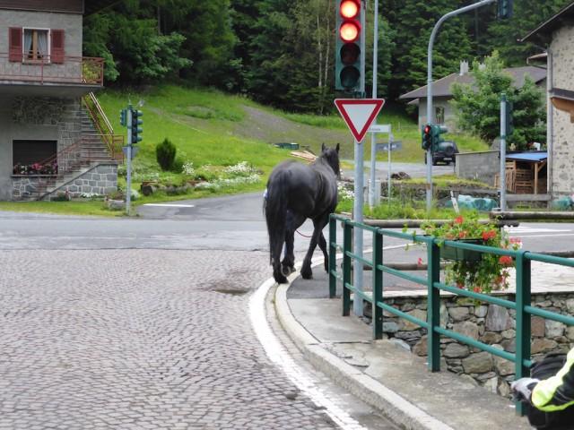 途中、お馬さんのお散歩に出会ったり・・・