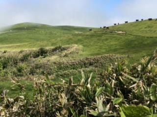 黒毛和牛が闊歩する広大な宗谷岬牧場