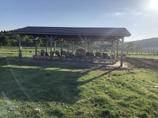 のんびりとしたトナカイ牧場