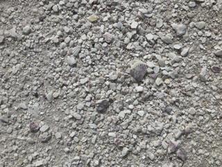 帆立の貝殻